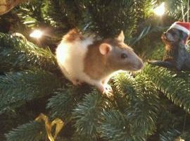 Christmas rat in a tree